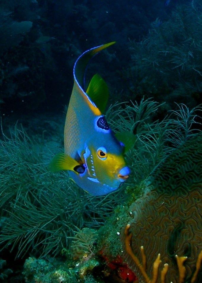 živopisne boje riba